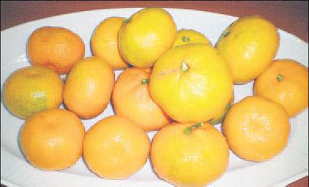 Satsuma mandalina ihracatına başlanıyor