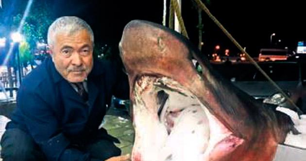 Marmara'da 850 kg'lik köpekbalığı