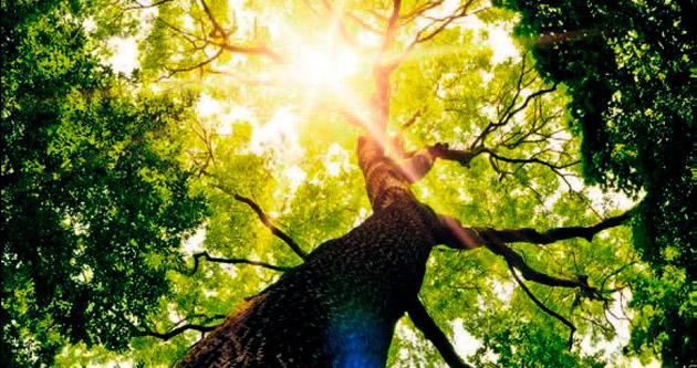 Cildin dostu: Neem ağacı