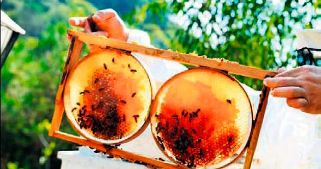 Dağıtılan arılar ilk ürünü verdi