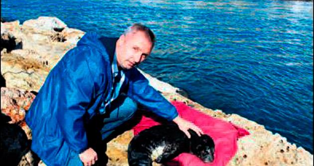 Akdeniz foku sahile vurdu
