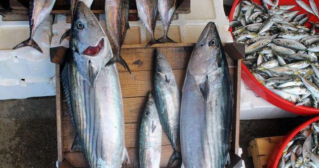 Palamut balığı avcılığında birinciyiz
