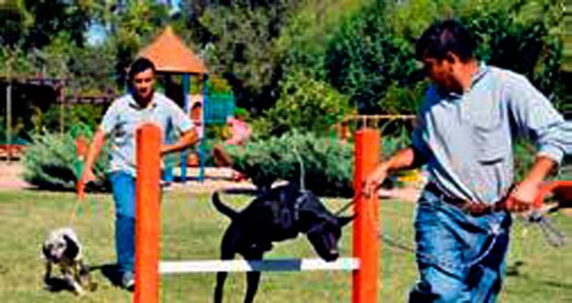 Sokak köpekleri için eğitim parkuru