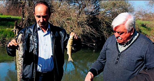 Balık ölümleri korkuttu