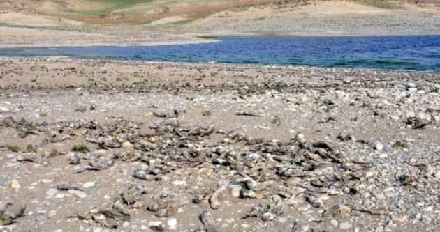 Binlerce balık kıyıya vurdu