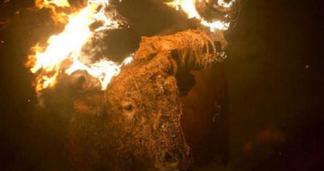 İspanyollar festivalde boğa yakıyor!