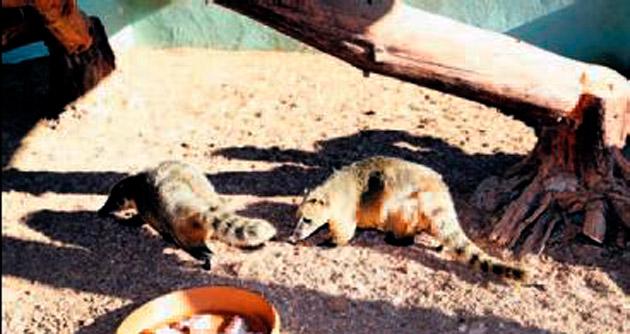 Hayvanat bahçesinin Amerikalı konukları