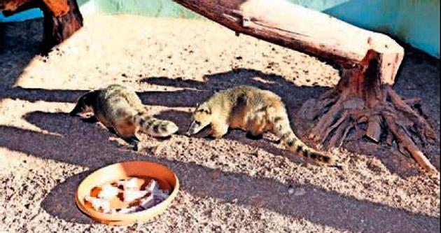 Gaziantep Hayvanat Bahçesi'ne 2 yeni üye