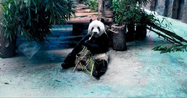 Pandalar ve sisler ülkesi