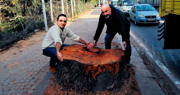 CHP'li başkana inat 2023 ağaç dikilecek