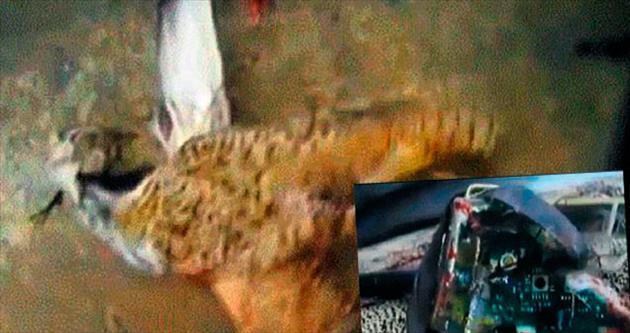 Kuşlar intihar bombacısı oldu