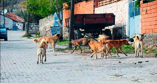 Başıboş köpekler korku salıyor