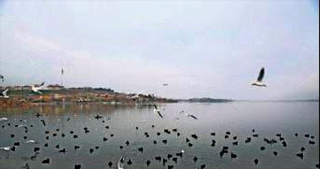 Mogan'da kuşların yiyecek kavgası