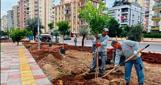 Doyran'a park Siteler'e ağaç
