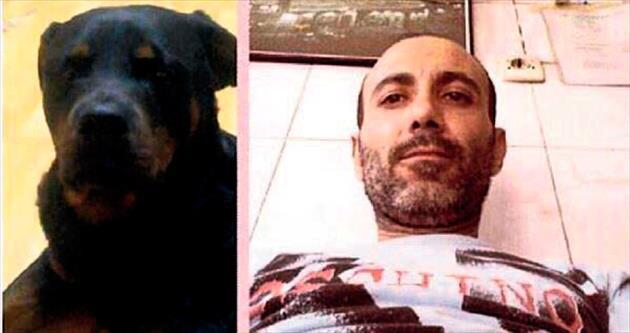 Rottweiler ölen sahibini parçaladı