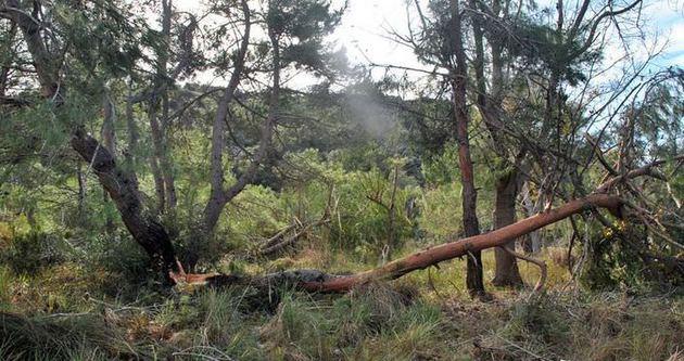 Antalya'da hortum ağaçları kökünden söktü