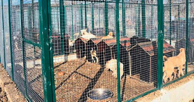 Büyükşehir'den sokak hayvanlarına koruma
