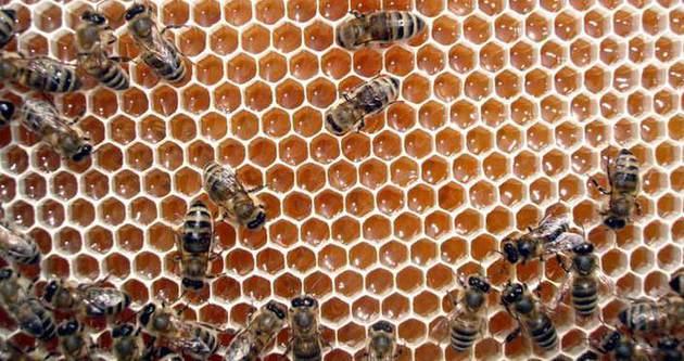 Arıların kışlatma dönemi başladı