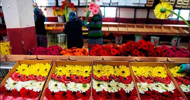 Yılbaşı çiçeği Antalya'dan
