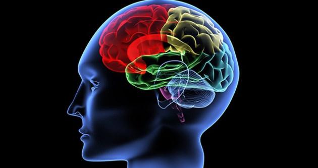İnsan beyninde yön bulmayı sağlayan iç pusula keşfedildi