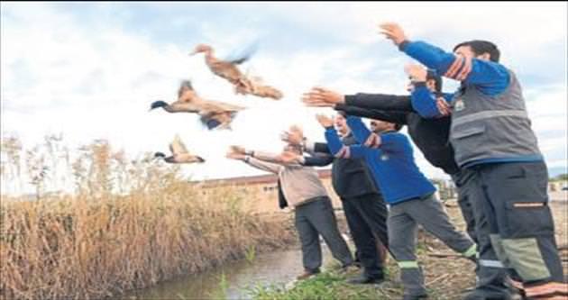 Yaban ördekleri doğaya bırakıldı