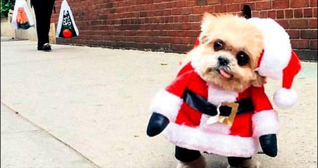Fenomen köpek Marnie, Noel Baba kostümü giydi