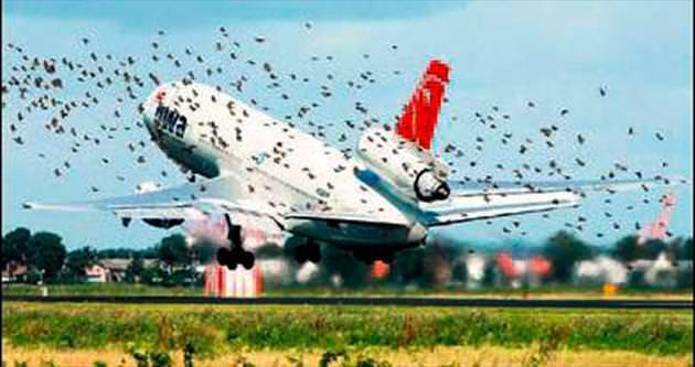 Atatürk Havalimanı'na kuşlar giremeyecek
