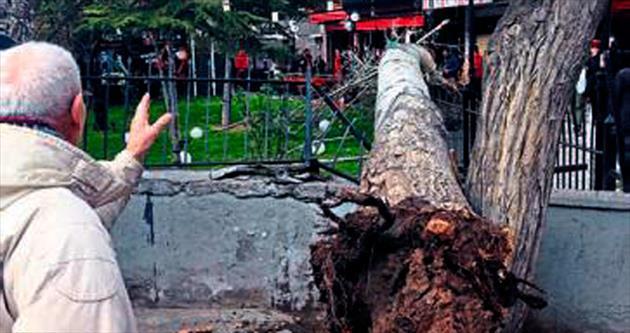 Parktaki ağaç rüzgarla devrildi