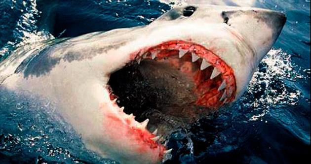 Avustralya'da beyaz köpek balığı saldırısı