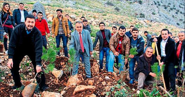 Gençler 50 çam fidanını toprakla buluşturup geleceğe yatırım yaptı