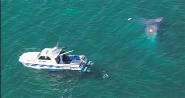 Düşen uçaktaki 13 kişi paraşütle atladı
