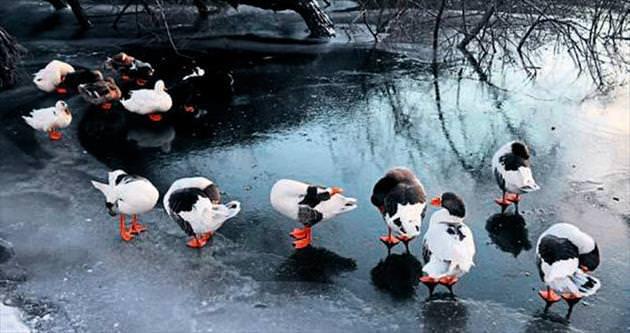 Göl ve şelale buz tuttu