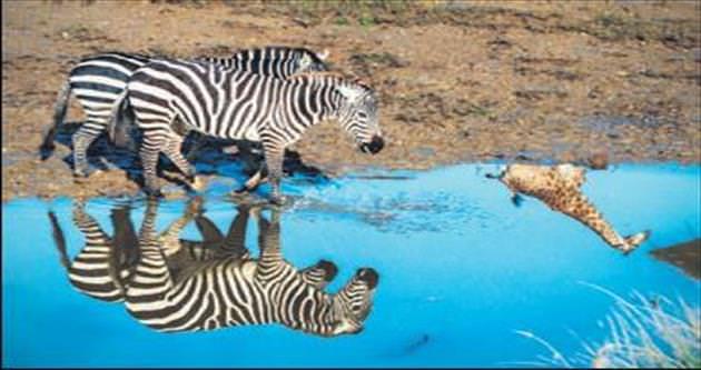 Afrika değil, İzmir Doğal Yaşam Parkı