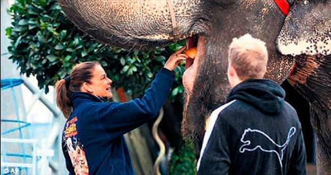 Prenses Stephanie elleriyle fil besledi