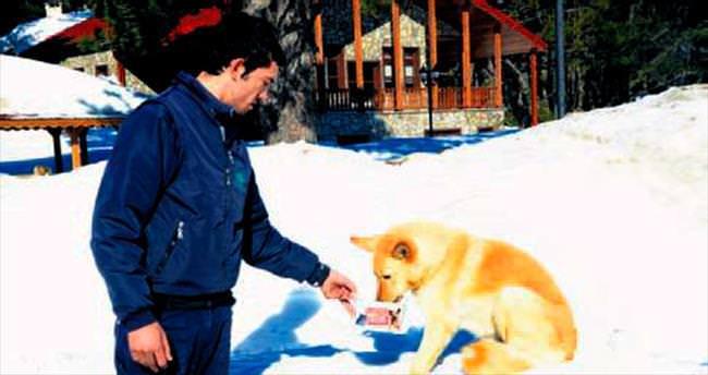 Sahipsiz hayvanlara Osmangazi şefkati