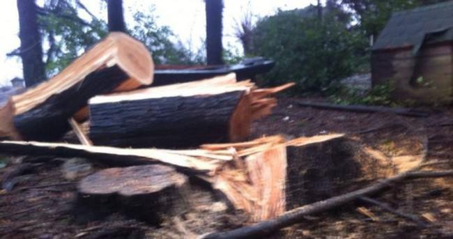 Sarıyer Belediyesi 50 yıllık ağaçları kesti
