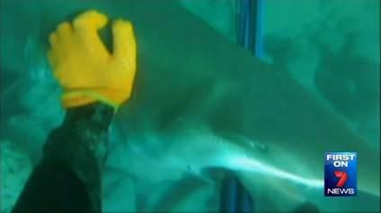 Zıpkınla dalış yapan gence köpekbalığı saldırısı