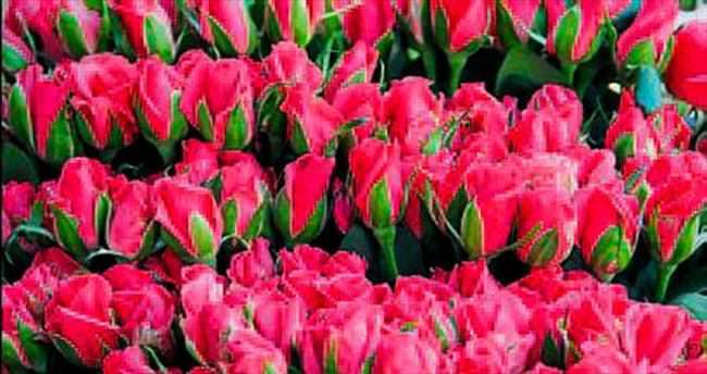 Çiçek seraları iyi durumda