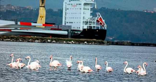 Alsancak Limanı kuşlara barınak