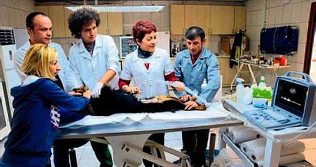 Veterinerliğe ultrason cihazı