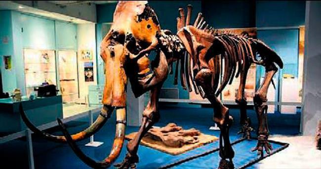Mamut iskeleti açık artırmaya çıktı