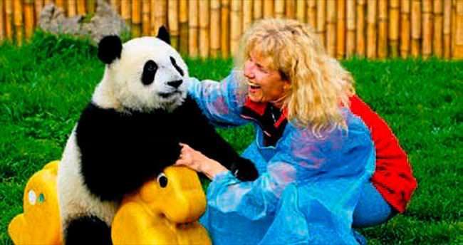 Günde 120 liraya panda bakıcılığı...