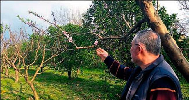 Yalancı baharla ağaçlar çiçek açtı
