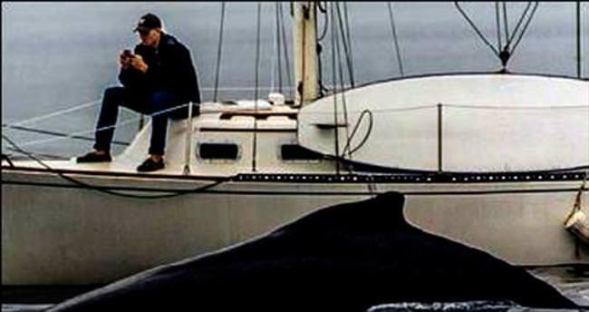 Telefonla oynarken balinayı fark etmedi