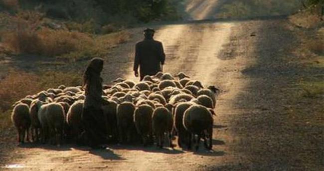 Sürü sahiplerinin çoban isyanı