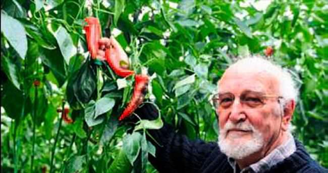 Kırmızı gül yerine biber ekiyorlar