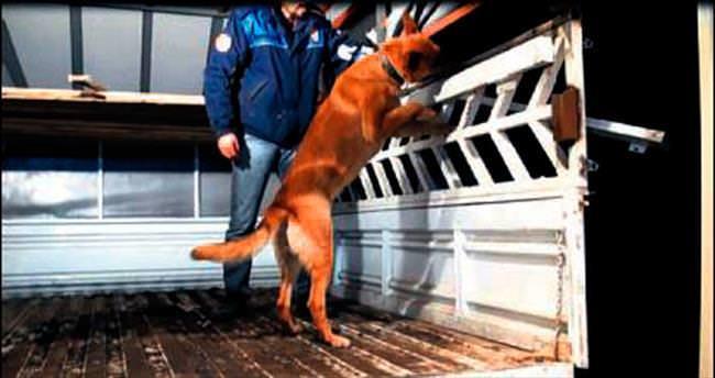 Narkotik köpeği Hera 14 kilo eroin yakalattı