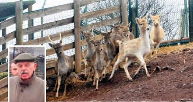 Vahşi hayvanları çiftliğe hapsetmiş