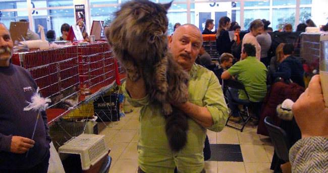 Kedi Rambo'ya 1 milyon lira fiyat biçildi