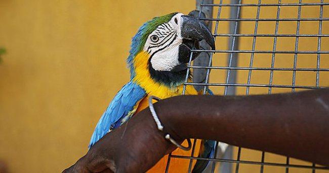 Senegal'in egzotik kuşları koruma altında